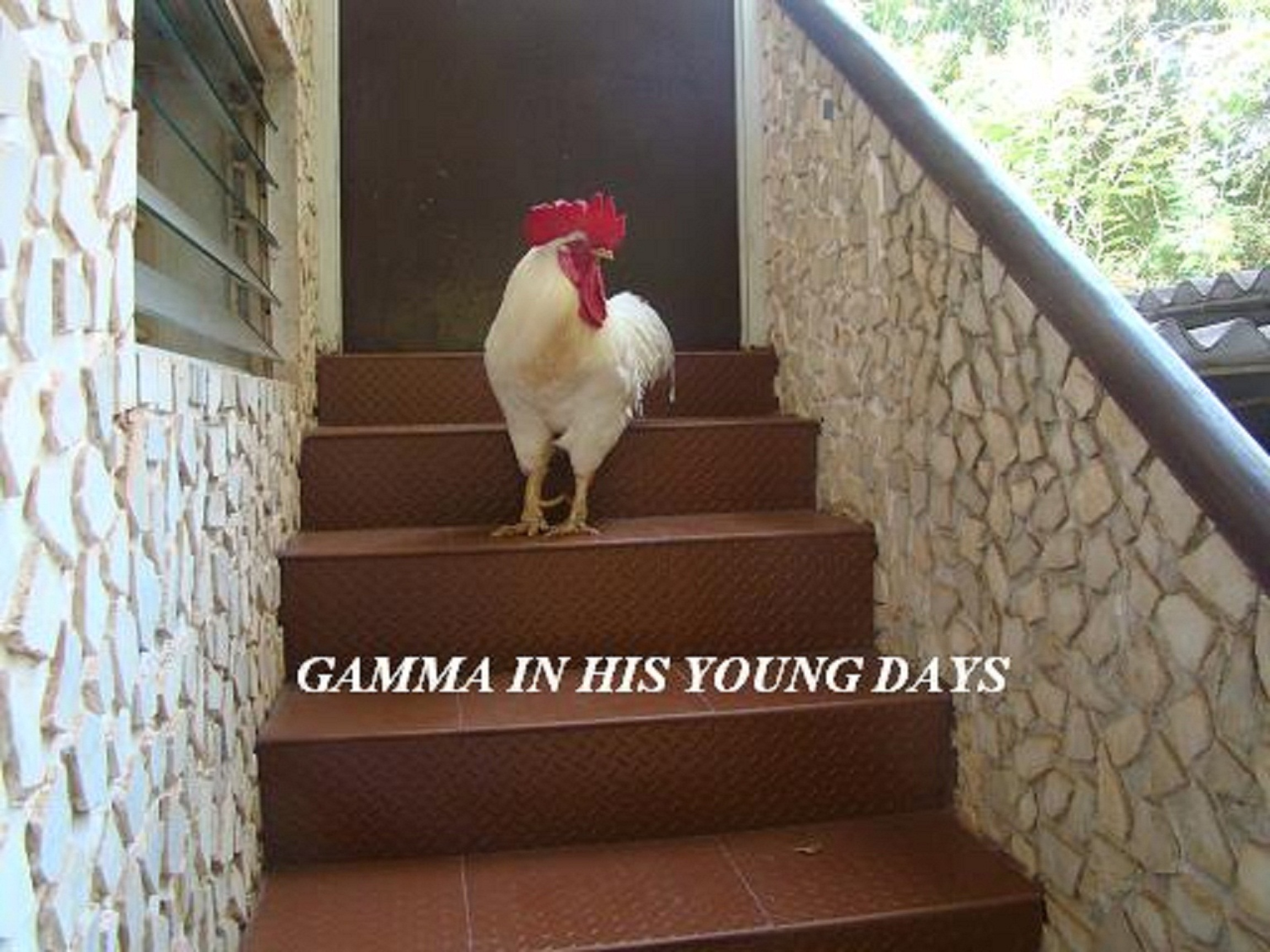 GAMMA STANDING ON STEPS.jpg