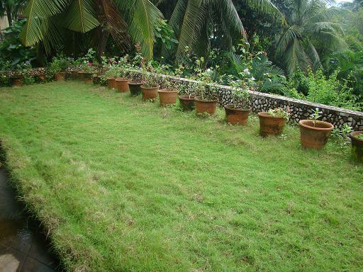terrace lawn.jpg
